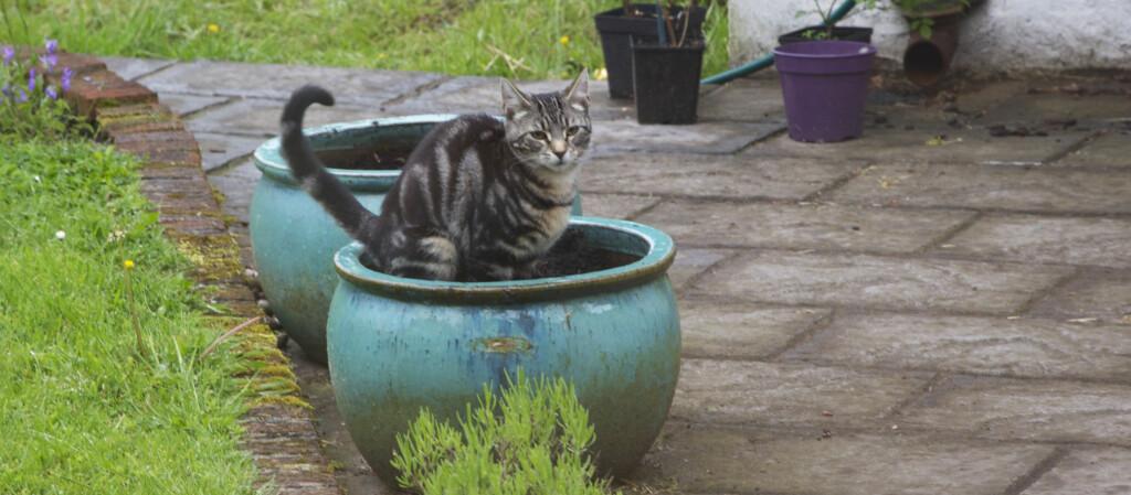 <b>KATTEDO?</b> Sliter du med katter som gjør fra seg i hagen, finnes det rimelige og smarte råd. Foto: ALL OVER PRESS