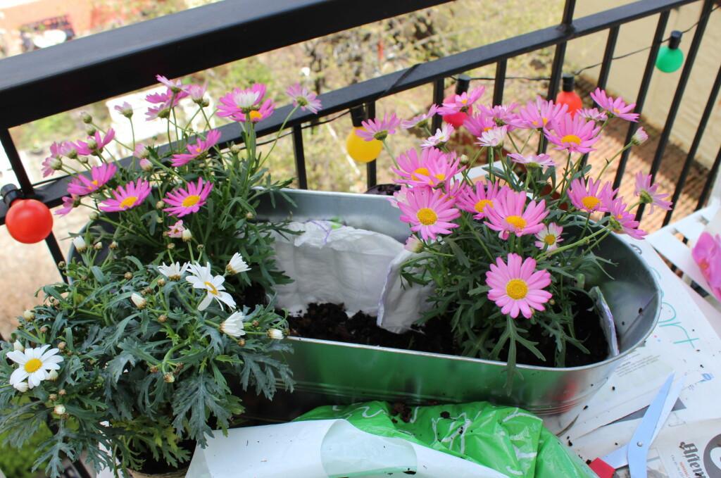 <b>TÅLER TØRKE?</b> Hvilke blomster skal du velge om du vil ha en flott balkong i sommer? Her er tipsene. Foto: ELISABETH DALSEG