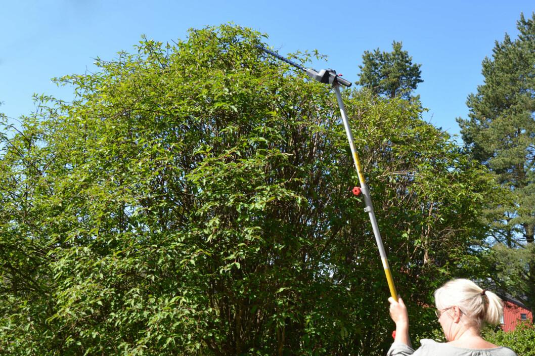 <strong><b>LANG REKKEVIDDE:</strong></b> Når du skal klippe høye busker og trær nytter det ikke med vanlig hekksaks. Vi har testet lange varianter. Foto: BRYNJULF BLIX