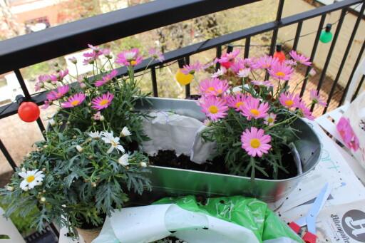 Vi fôret en blomsterkasse med bleier, og plantet på vanlig måte. Foto: ELISABETH DALSEG