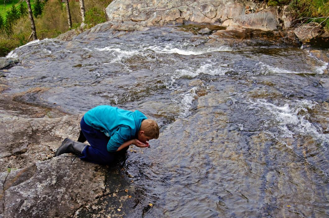 Vannet er som regel tryggest ved utløpet av tjern og sjø. Men se deg om før du drikker fra naturen. Foto: Colourbox.com