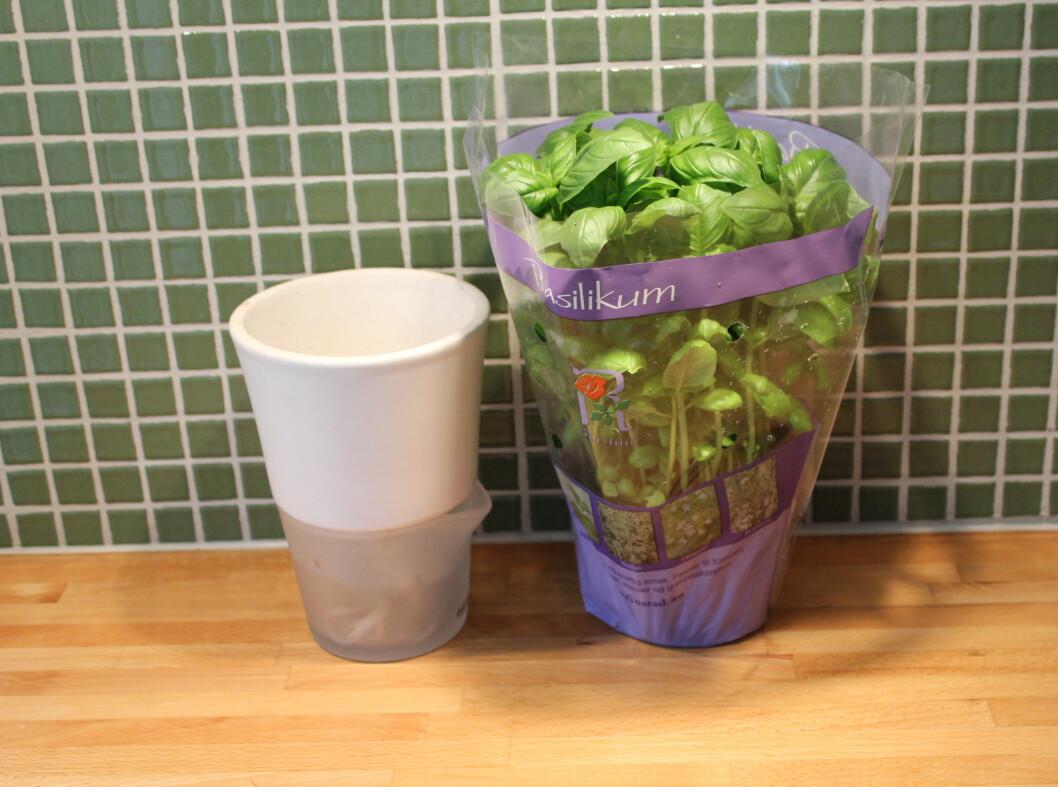 Selvvanningspotten fra Eva Solo består av to deler, en skål som du fyller med vann, og en potte vi planter urten i. Ned fra den er det små garntråder, som hjelper krydderurten å suge til seg vann.  Foto: Elisabeth Dalseg