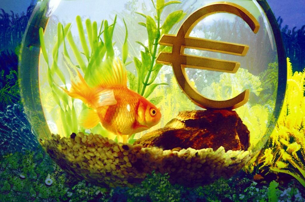 Gullfisken Happy kan leies ut til ensomme gjester. For fem pund, eller cirka 45 kroner per opphold.  Foto: colourbox.com