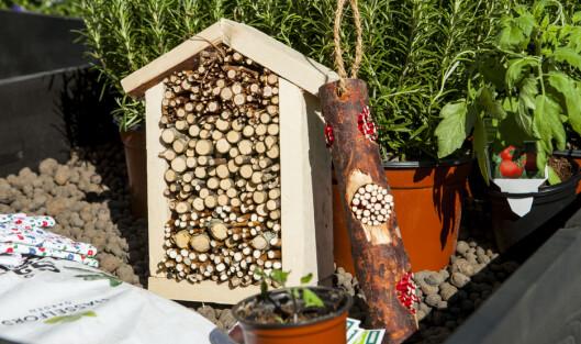 Du kan snekre insektshotellet selv, og fylle det opp med småkvist, eller bruke noe du har liggende i skapet.  Foto: Per Ervland