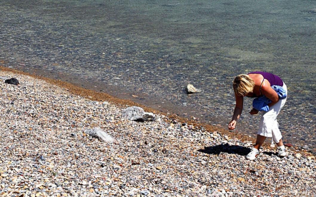 <strong> SKJELLPLUKKING:</strong>  Hvis mange nok gjør dette kan det skade livet i strandsonen. Foto: EIVIND PEDERSEN