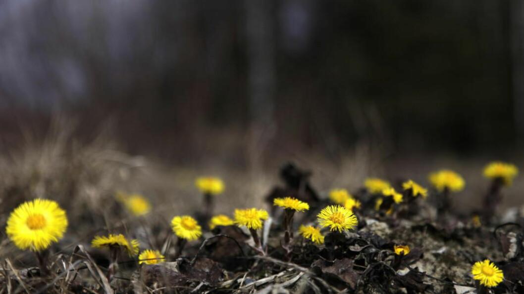 <strong>VÅR ELLER VINTER?:</strong> Store deler av landet kan se fram til fint vær, med stigende temperaturer og sol i løpet av uka.  Foto: Geir Bølstad/Dagbladet