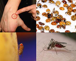 Insektene du ikke vil ha besøk av i sommer