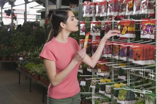 Det er dyrt nok å kjøpe frø, om du ikke skal kjøpe alt ekstrautstyret også. Så hvofor ikke starte med å så dem i vinduskarmen - i muffinsbrettet? Foto: All Over Press