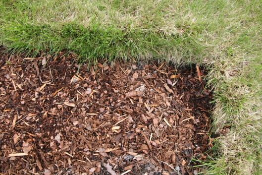 Legg duken helt inn til gresskanten, og 5 cm med bark.  Foto: Maren Synnevåg