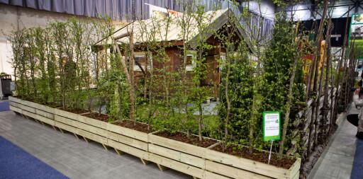 Hvorfor kjøpe små hekkeplanter du må drive frem over flere år når du kan få fiks ferdig hekk? Som her fra BoGrønt på Hagemessen på Lillestrøm forrige helg.  Foto: Per Ervland