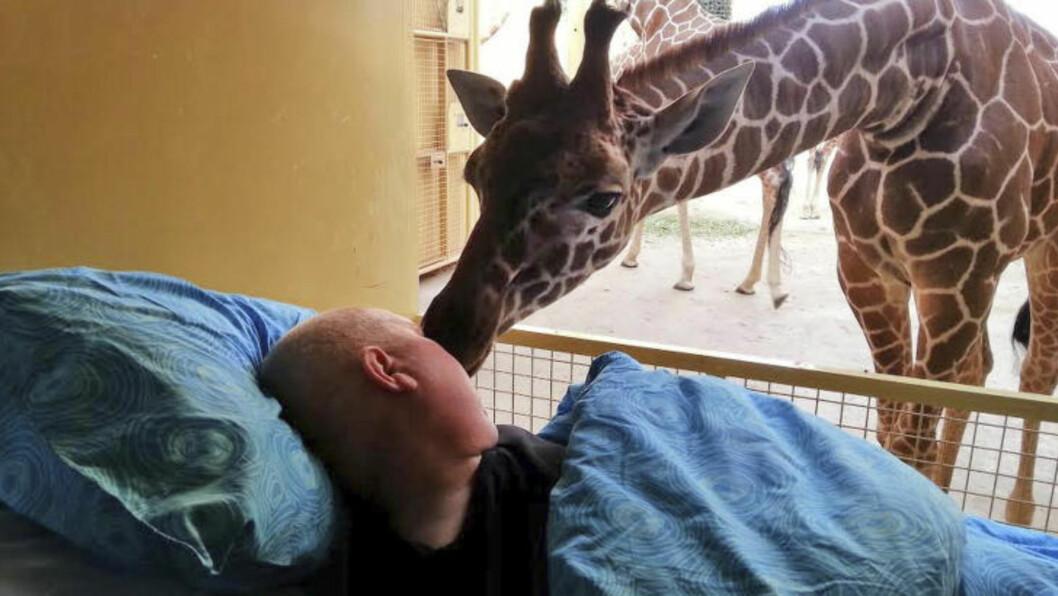 <strong>KAN SANSE SYKDOM:</strong> Flere undersøkelser understøtter teorien om at dyr har evne til å sanse alvorlig sykdom hos mennesker. Foto: STITCHING AMBULANCE WENS / AP / NTB SCANPIX