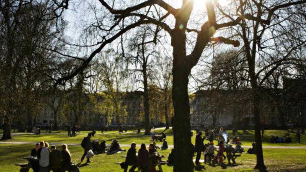 <strong> BYPÅSKE:</strong>  Også i Oslo har det vært fint vær i deler av påsken. Her henger folk i Sofienbergparken i hovedstaden tirsdag kveld. Foto: Anette Karlsen / NTB scanpix