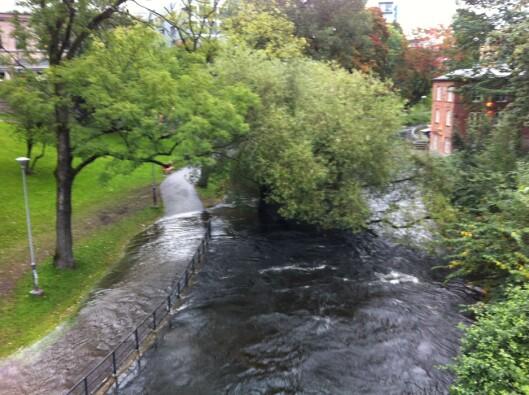 Vannstanden er unormalt høy i flere norske elver. Slik så Akerselva i Oslo ut i dag morges.  Foto: Elisabeth Dalseg