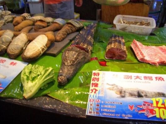 Slik går det når noen ønsker seg krokodillekjøtt til middag. Råvarene blir ikke særlig mye ferskere enn dette. Foto: Privat