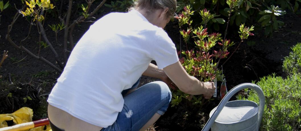 <strong><b>PLANT NÅ:</strong></b> Det er mye du kan plante og forberede til våren. Foto: Colourbox.com