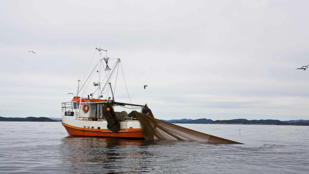 FRIR TIL REGJERINGEN: Fiskerne satser på at regjeringen sikrer langsiktige fiskekvoter. Foto: Nina Hansen