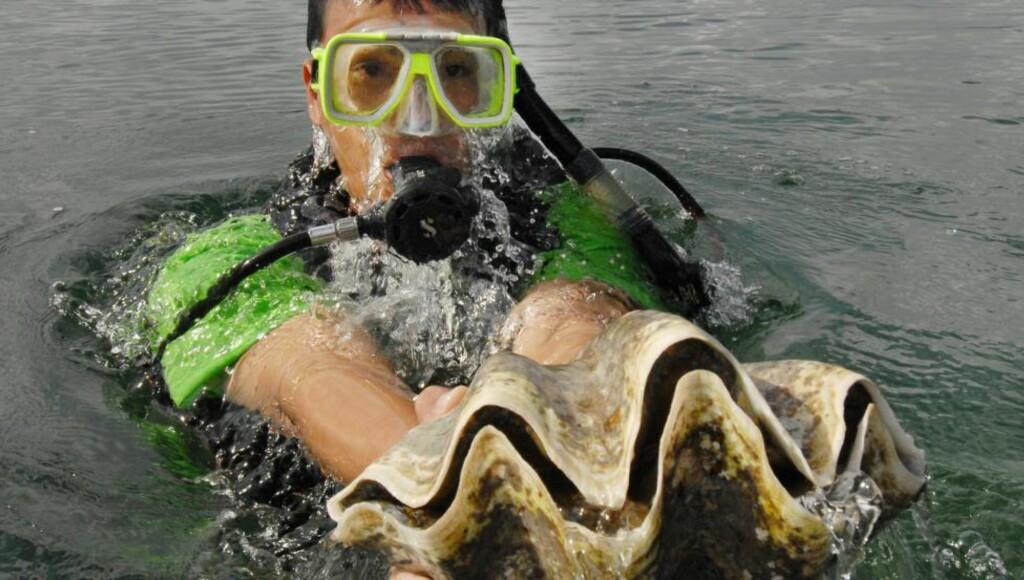 KAN FORSVINNE:  Forskerere frykter at hele 30 prosent av artene i havet kan være borte innen utgangen av dette århundret - deriblant bløtdyr og koraller. Foto: AFP PHOTO / ROMEO GACAD / NTB Scanpix