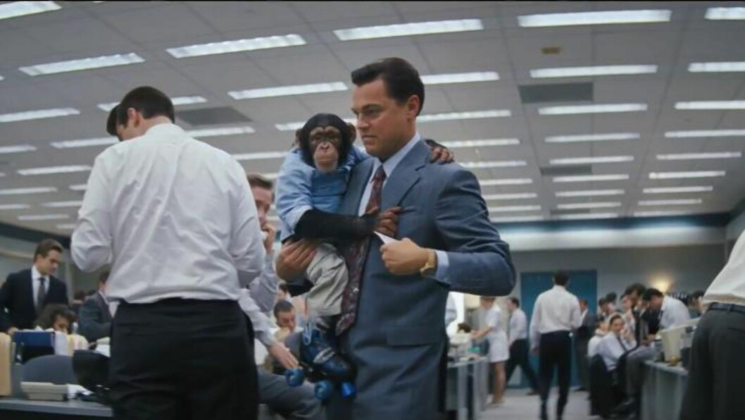 <strong>I KLÆR:</strong> Sjimpansen Chance spiller Leonardo DiCaprios kjæledyr i den kommende filmen  «The Wolf of Wall Street».