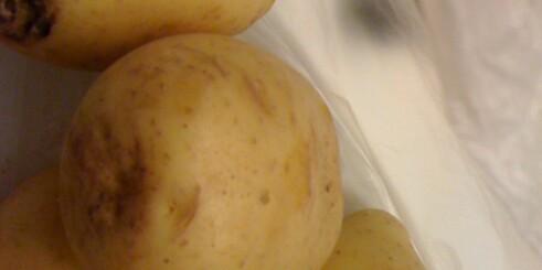 Stadig dårlige poteter
