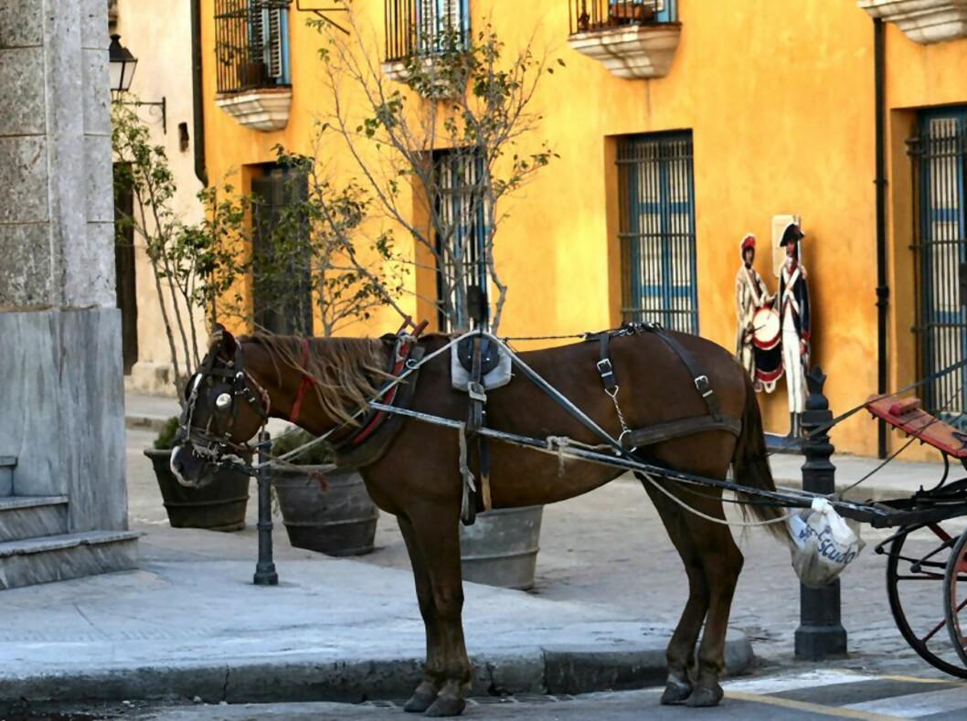 Hest og kjerre er ennå ikke utkonkurrert av motoriserte kjøretøy på Cuba. Foto: Tove Andersson
