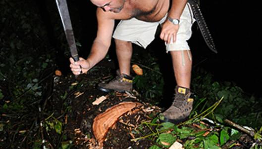 Slik flytter de trær som har falt over veien i Costa Rica. Legg inn noen timer ekstra hvis du reiser i fjellene... Foto: Hans Kristian Krogh-Hanssen