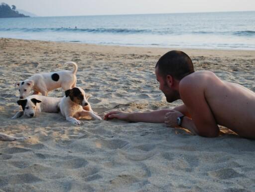 Hundene lever glade dager på stranden i Patnem. Indisk eventyrmiks, kan vel rasen kalles. Foto: Hanne Haugen