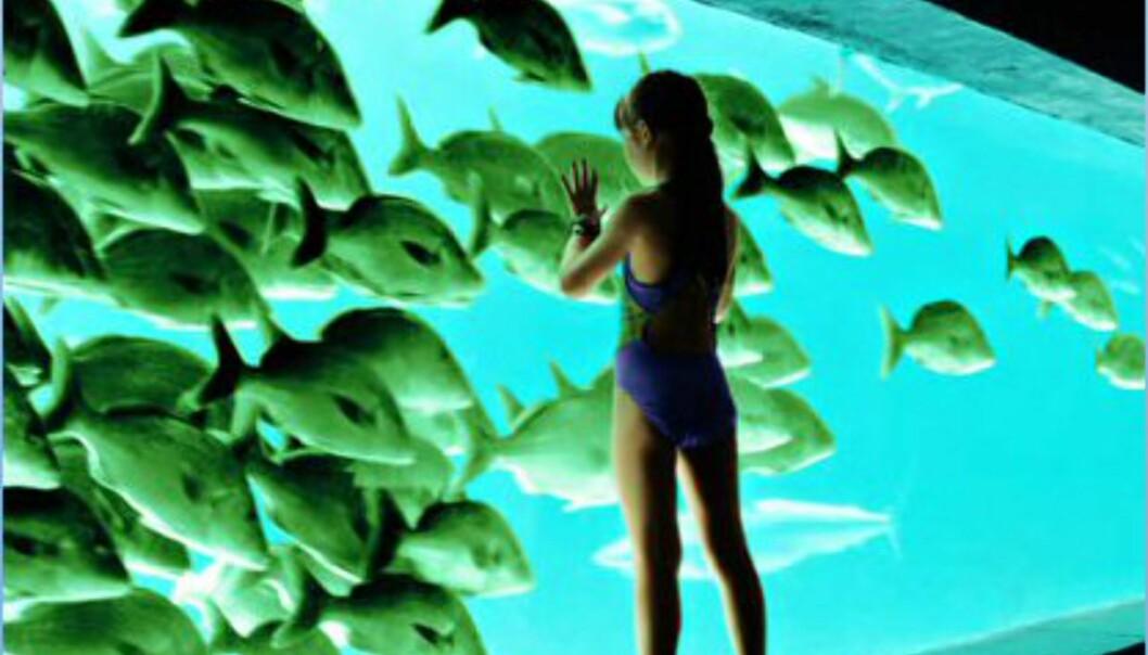 The Lost Chamgers er en undervannspark full av fisk. Foto: Atlantis The Palm