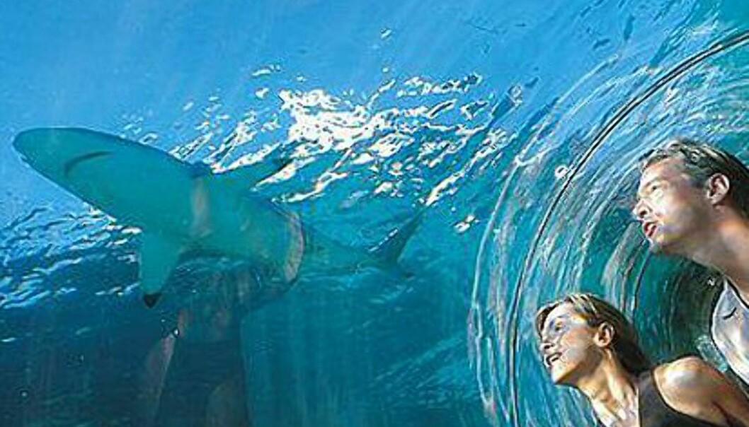 Få nærkontakt med haien. Foto: Atlantis The Palm