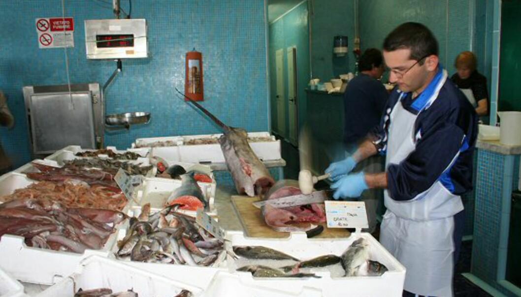 Tunfisk på boks blir ikke det samme etter å ha smakt en av filetene fra denne ruggen av en tunfisk… Foto: Elin Fugelsnes