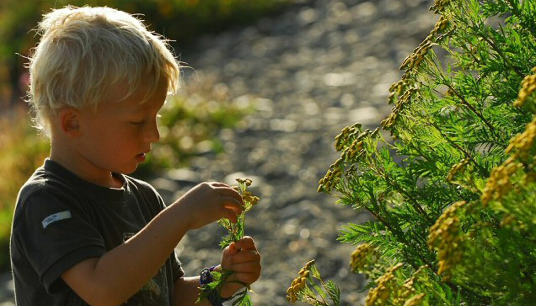 Patrik plukker blomster til mamma.  Foto: Roger Skjetlein