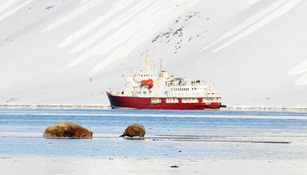 Polar Star i bakgrunnen, med to imponerende hvalrosser hvilende på isen foran.  Foto: Hans Kristian Krogh-Hanssen