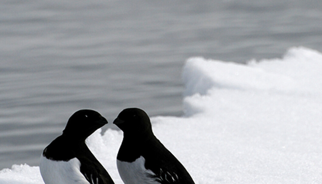 En fugleforelskelse, eller er du bare nebbete..?  Foto: Hans Kristian Krogh-Hanssen
