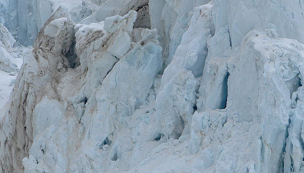 En isbjørn i Raudfjorden. Det finnes sirka 3 000 isbjørn rundt og på Svalbard.