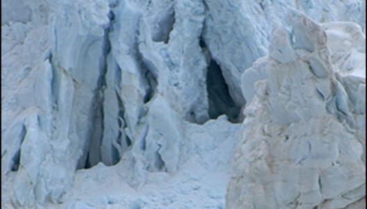 Østisen på Svalbard er området med mest isbjørn i øyriket, turistnæringen er frykter fall i den voksende turismen hvis tilgangen blir stengt.   Foto: Hans Kristian Krogh-Hanssen