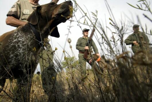 Ta med gutta på en spennende og testosteronfylt jakt. <i>Illustrasjon: colourbox.com</i> Foto: colourbox.com