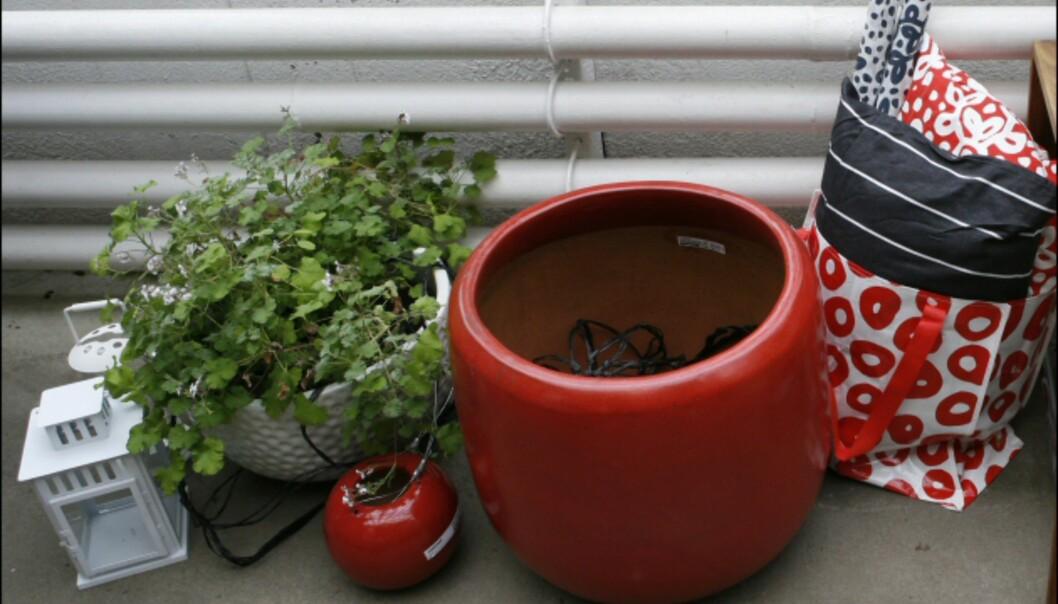 Fyll små og store krukker med planter, og du kan lett skape en frodig oase, selv om du ikke har stor hage. Her krukker fra Ikea i Palmehuset i Botanisk hage i Oslo. <i>Foto: Per Ervland</i> Foto: Per Ervland