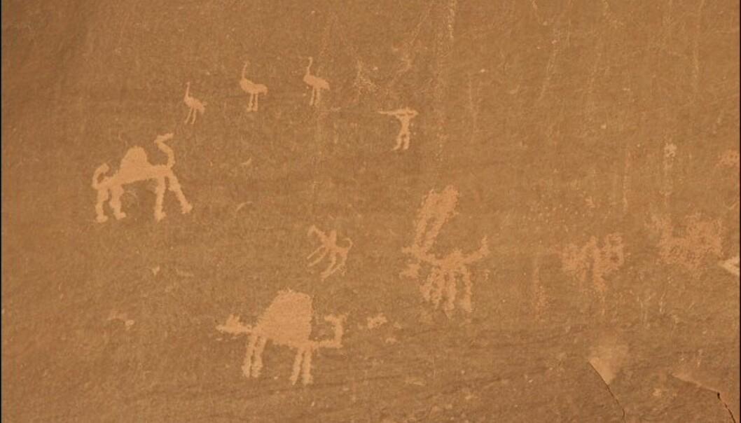 Helleristninger risset inn i fjellet av nabateere. Disse regjerte ørkenområdene i Jordan fra cirka 400 f.Kr. til 300 e.Kr. <br /> <br />