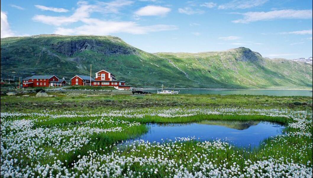 Fra Jotunheimen. Foto: Anders Gjengedal/Innovasjon Norge