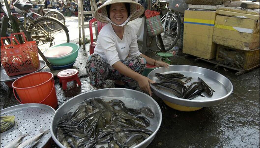 På Phu Quoc er fisken alltid fersk. Foto: Vibeke Montero