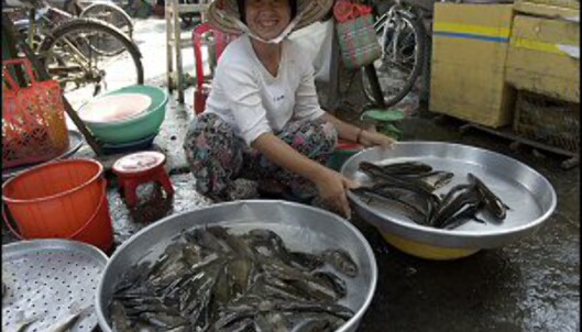 Alltid fersk fisk å få tak i på fiskemarkedet. Foto: Vibeke Montero
