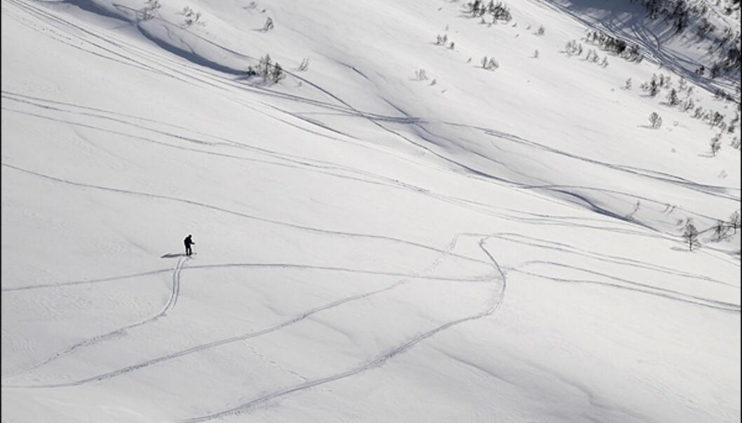 <i>Foto: Hans Kristian Krogh-Hanssen</i>