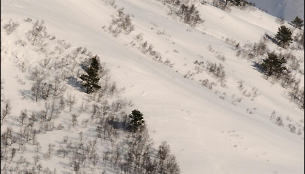 Urørt terreng...<i>Foto: Hans Kristian Krogh-Hanssen</i>