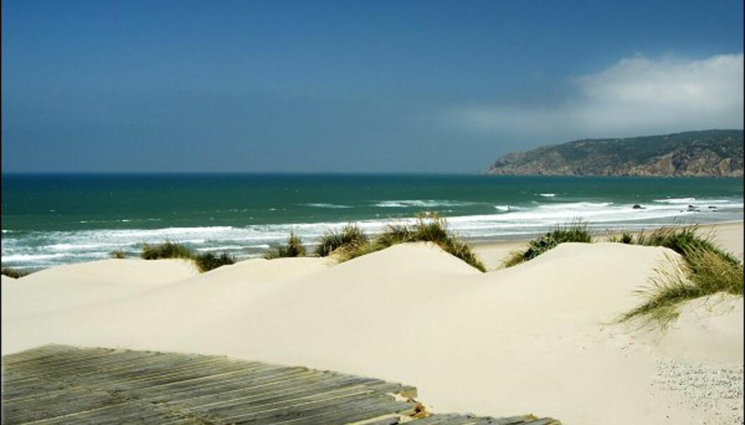 Vindblåste og surfevennlige Praia do Guincho ligger rett utenfor feriestedet Cascais i Portugal.<br />  Foto: Vibeke Montero