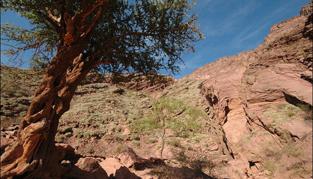"""La garganta del diablo"" - Djevlens hals, blir denne ravinen i <i>Valle Calchaquies</i> kalt."