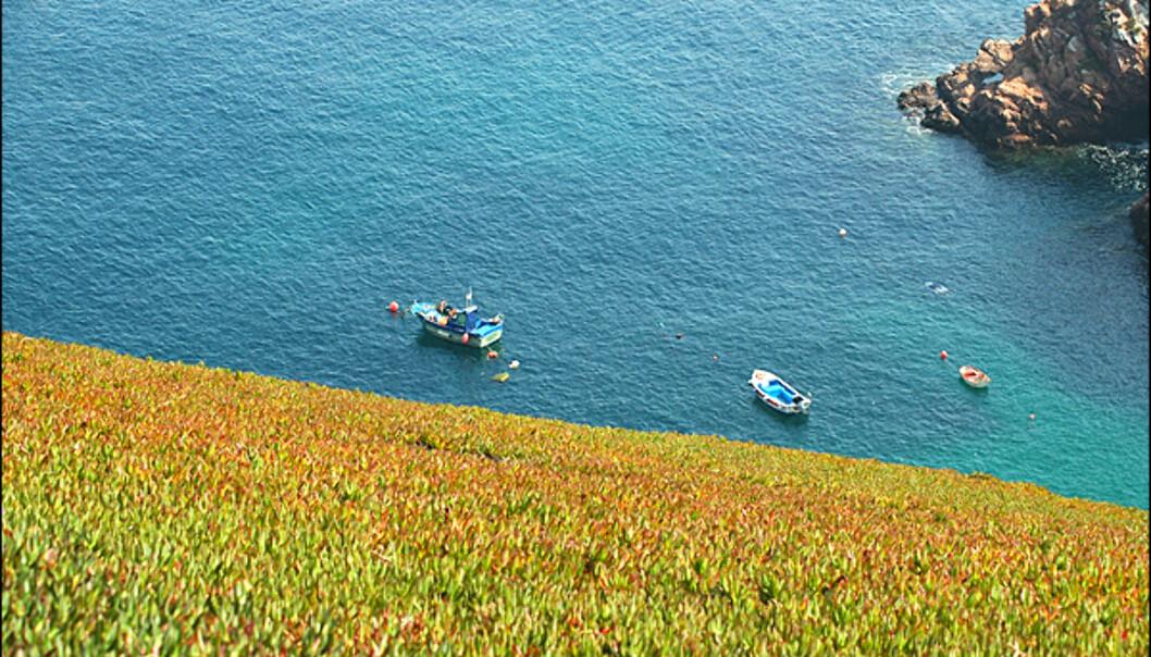 Noen åssider på den 85 meter høye øya er kledd i vakre blomster og fargefylt landskap.
