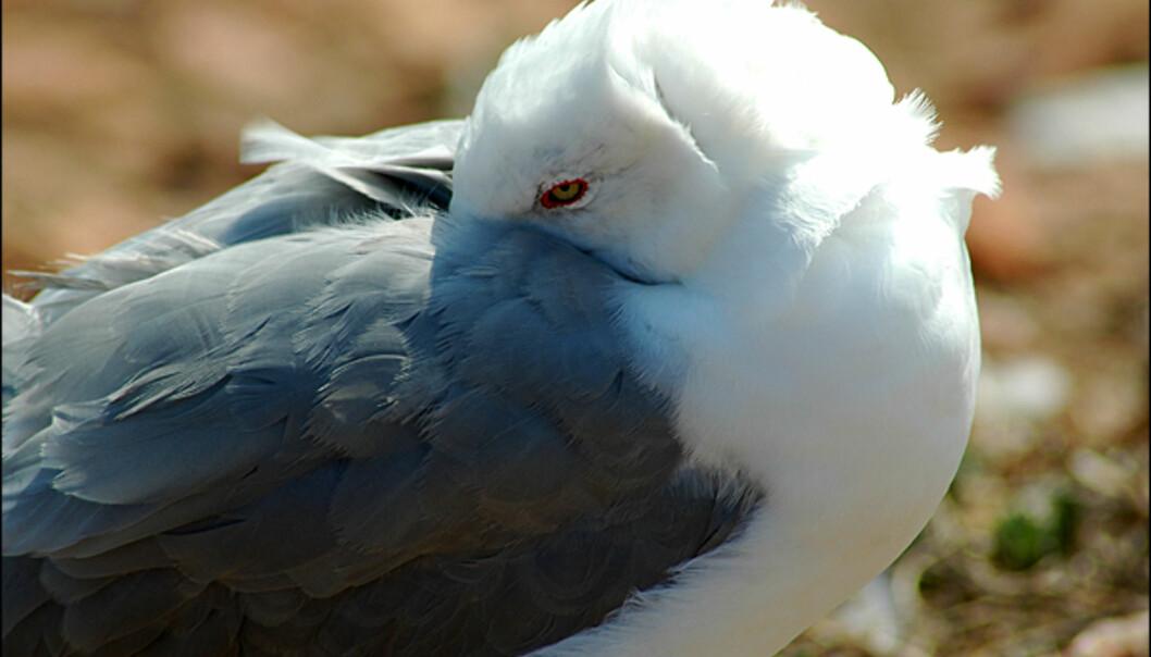 Liker du å komme tett på sjøfugler, er øya en drøm for deg!