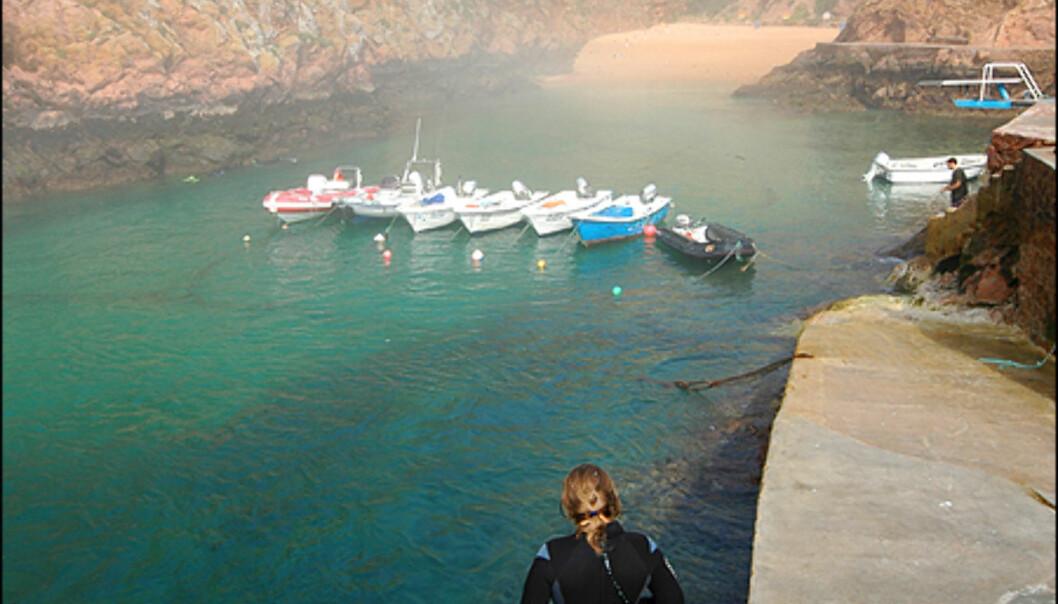 Dykking på Berlengas er populært.