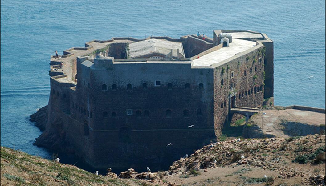 Borgen sett fra toppen av øya.