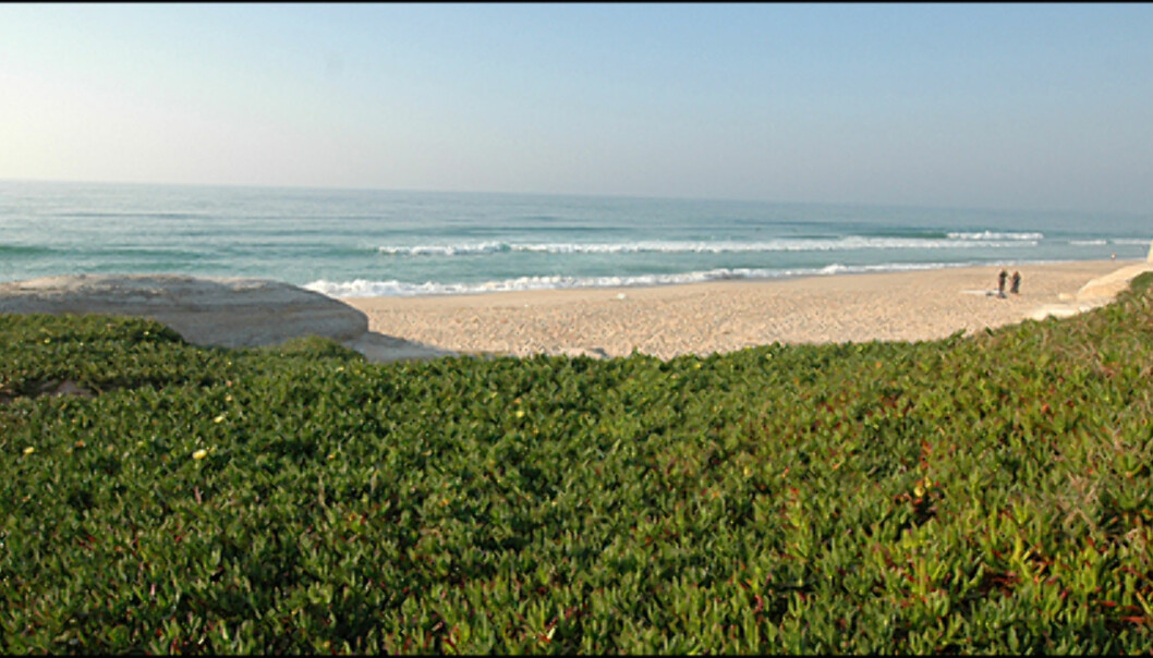 Tomme strender som denne er ikke et uvanlig syn i området som kalles Sølvkysten.