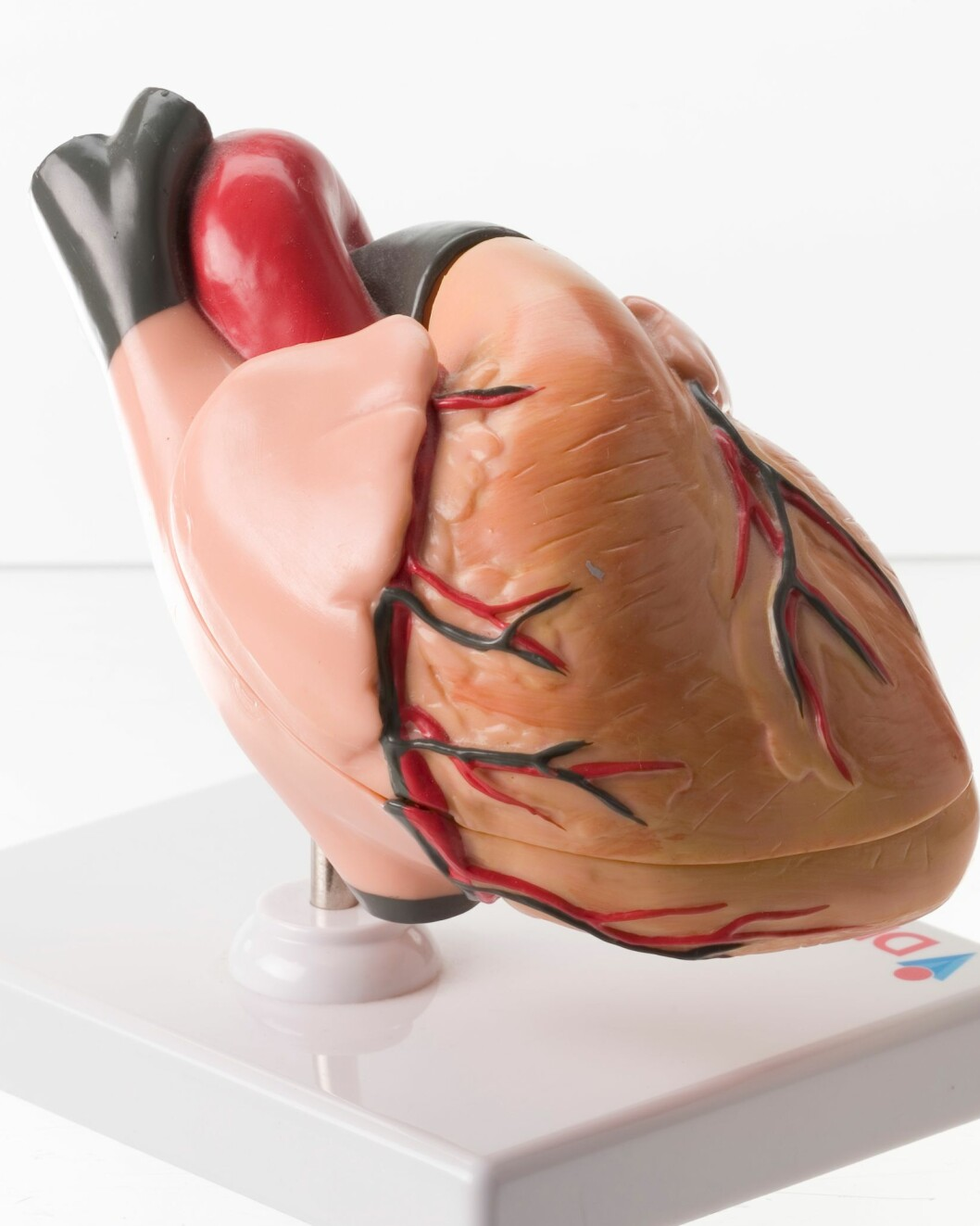 Rekordår for organdonasjon